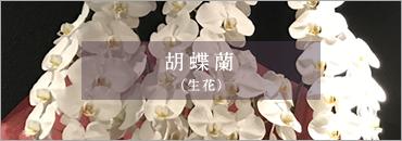 胡蝶蘭(生花)