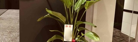 オリジナル観葉植物