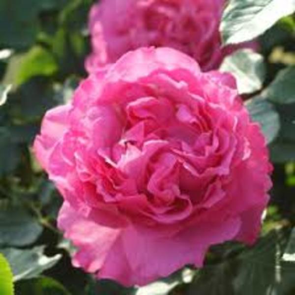 受験生には薔薇を…♡