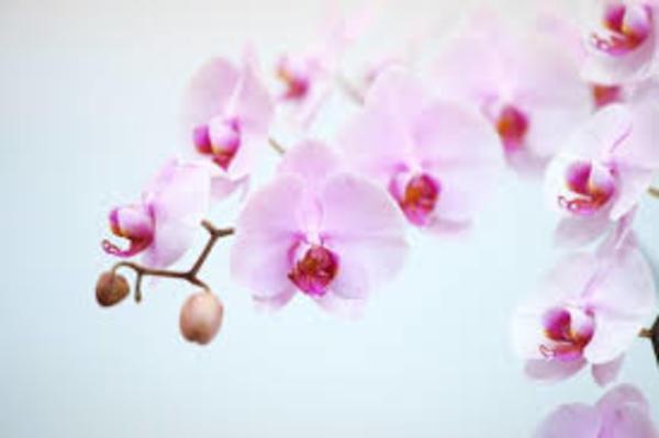 9/20(月)は敬老の日です。プレゼントにお悩みの方必見です!!