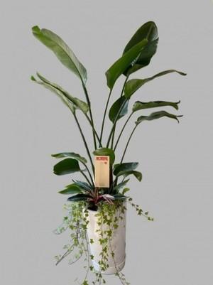 【観葉植物鉢付きセット】開店、開業、開院、周年祝い、オフィスのインテリアなどに…