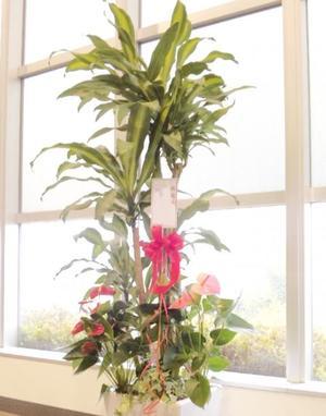 観葉植物 25000