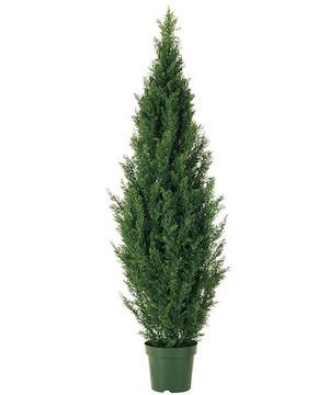 150cmグリーンシダーツリー