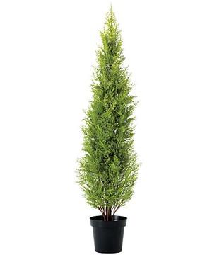 150cmゴールドクレストツリー